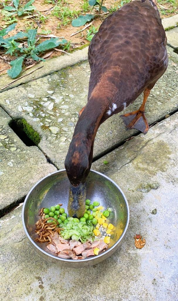Yusheng for pet duck by SGPolishChicken. Pet duck in Singapore