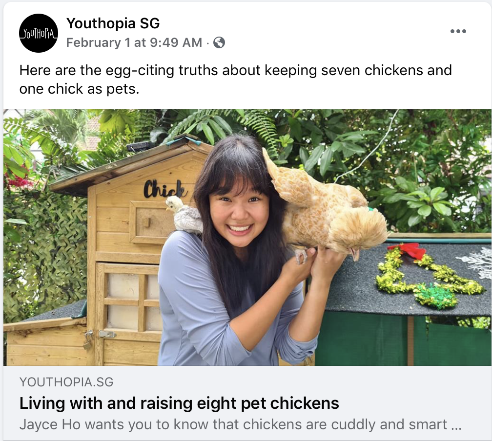 Jayce Ho and Pet Polish Chickens in Singapore